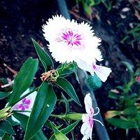 una flor sacada de una aplicacion llamada B612