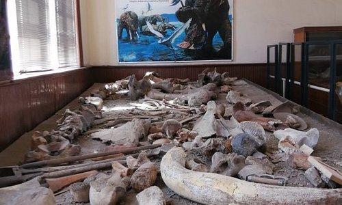 Museo Del Mamoth