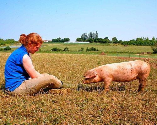 Feed the animals around the farm.