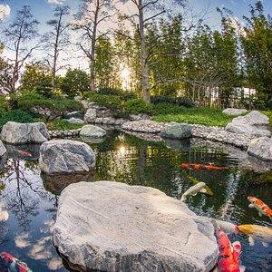 Upper garden koi pond. --- Image by Scott Hallock