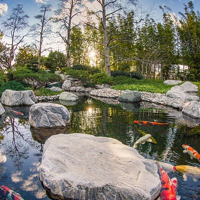 Upper garden koi pond. --- Image by Scott Hallock