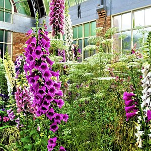 Winter Garden Auckland