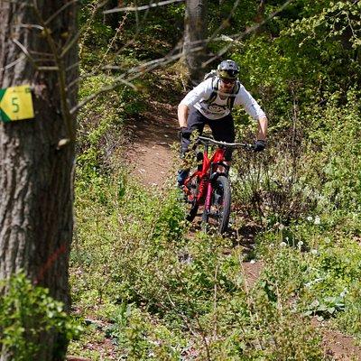 Der Z-Trail: Schwierigkeit: mittel / Länge: 0,5km / Höhendifferenz: 95hm  Der Name ist Programm! Über viele Kurven schlängelt sich dieser Trail, direkt hinter der Talstation den Berg hinunter. Wer gerne Kurven fährt oder besser darin werden möchte, ist hier genau richtig.