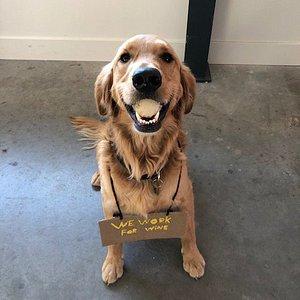 Abel the wine dog.
