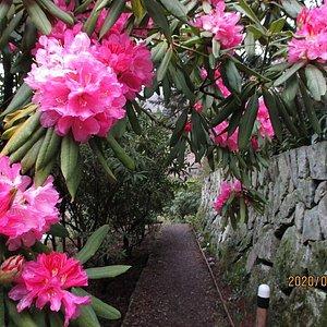 山小屋へのアプローチ廻りは開花しております