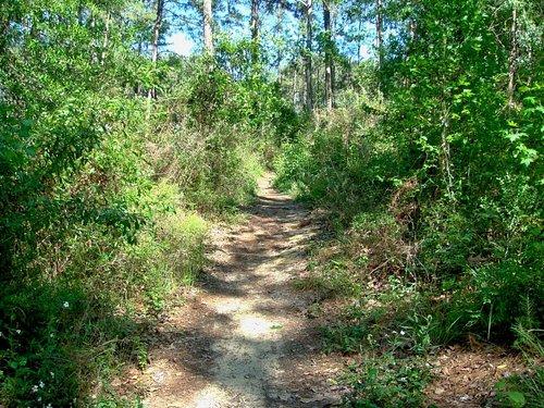 John Slidell Park - walking trails