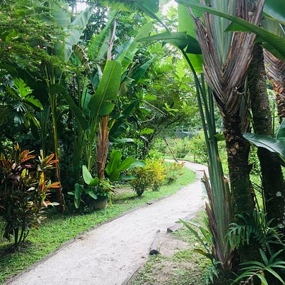 Walking along the path of beautiful white savanna sand, you'll experience the calming effect of nature @The Garden