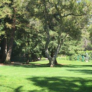 Shoup Park, Los Altos, Ca