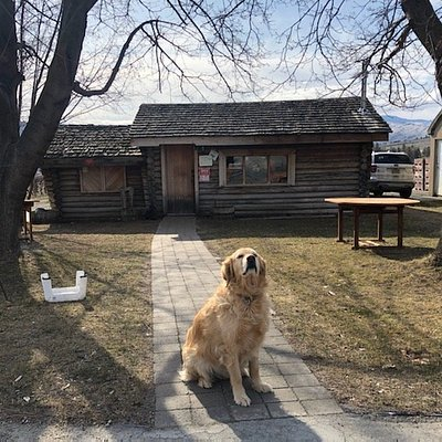 Dogs of the Vineyards. Honey welcoming guests on our opening day in 2020.