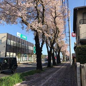 春は桜並木が美しい場所です。