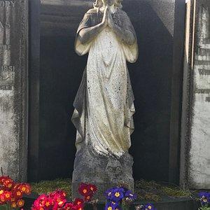 primrose angel