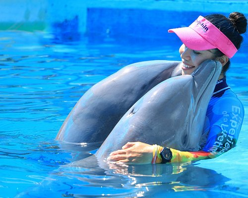 Discover our love for the dolphins