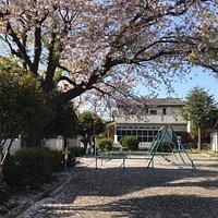 桜の舞い散る季節にお勧めです。