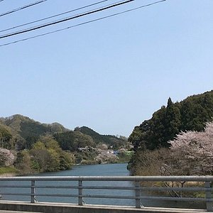 湖畔沿いに咲く桜