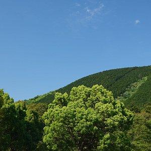 天城グリーンガーデン:山の眺望