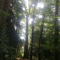 Il bellissimo parco di Villa Chiozza, a Scodovacca di Cervignano. Visitabile negli orari di apertura di Villa Chiozza, sede di Promoturismo