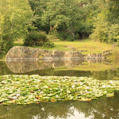 Seerosen im Steinbruch-See