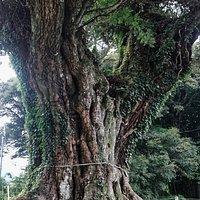 寂光寺:上野村の大椎