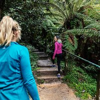 Walking the 1000 Steps, Dandenong Ranges National Park