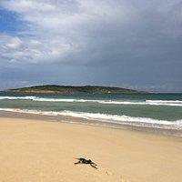 Gabo Island
