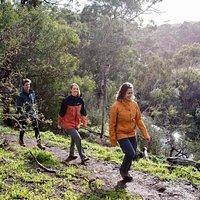 Walking, Plenty Gorge Park