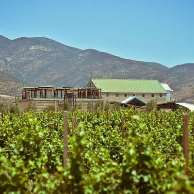 The winery and the vineyards in the summer.