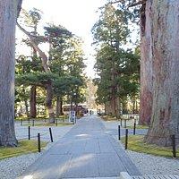 中門から見た杉の大木。どの角度から見ても美しいですね。