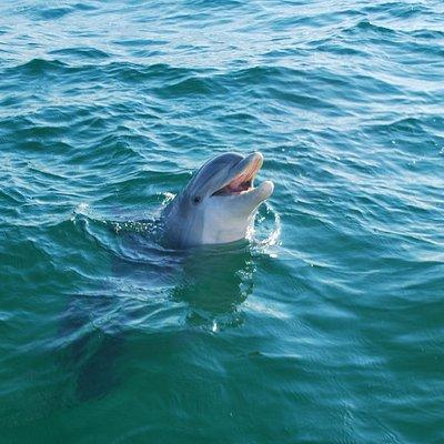 Dolphin we met