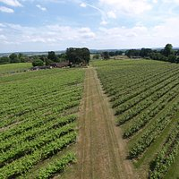 Welcome to Brightwell Vineyard!