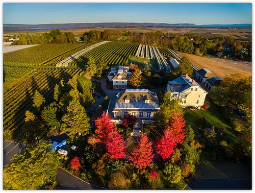 Wine shop, Restaurant and vineyard in the fall
