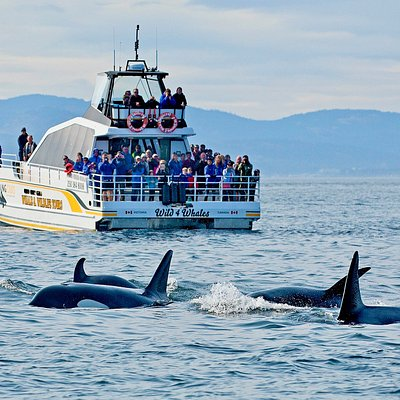 Eagle Wing Tours is the Premier tour operator on Vancouver Island