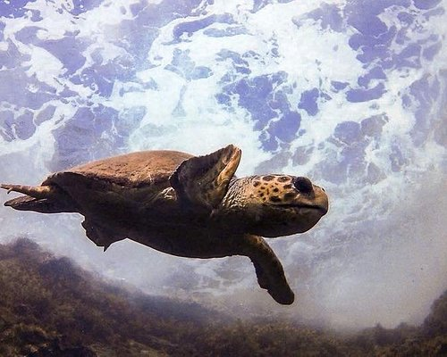 Beautiful Turtle shot at the Ampitheatre dive site. Diving in Cyprus !