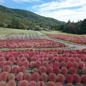 伊賀野の花畑:展望台からの景色
