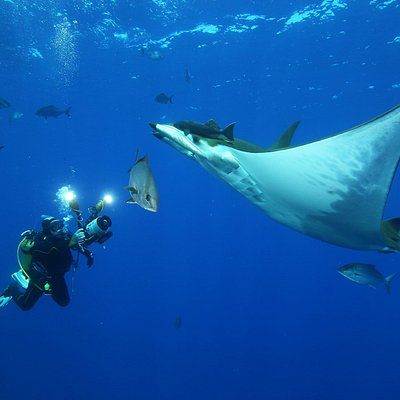 Amazing dives ⚓Underwater Adventures ⭐PADI 5* Dive Resort 👉🏻#seasonchallenge 🐋 Diving School with daily fun dive trips, offshore dives, manta dives, try dives, PADI Courses from beginner to Pro, Snorkeling Tours. 📍Ponta Delgada, S. Miguel, Azores 🇵🇹 www.seasonchallenge.pt