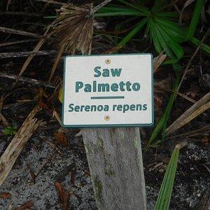 Botanical Signage
