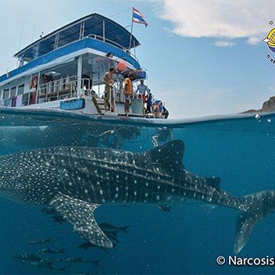 Lanta Diver 1 and a Whale Shark at Koh Ha