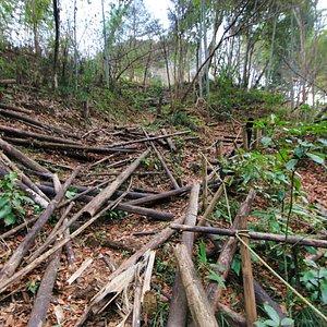 坪渕の滝:遊歩道を下から見上げました。伐採した竹が崩れたのでしょうか?かなりあれています。往きは下り、復えりは上りになります。