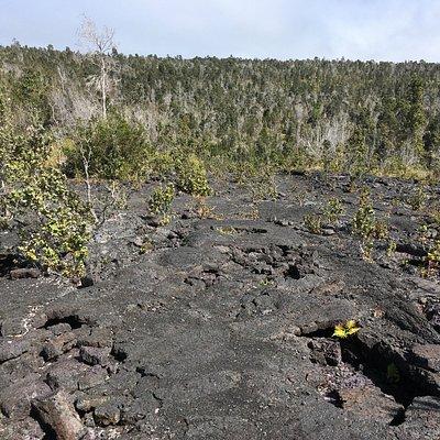 Hawaii Volcanoes National Park - Hi'iaka Crater