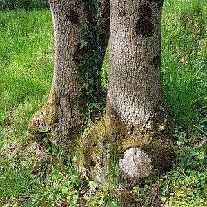 De jolis arbres atypiques dans ce joli parc !
