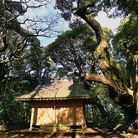 天神社:巨木に囲まれた天神社