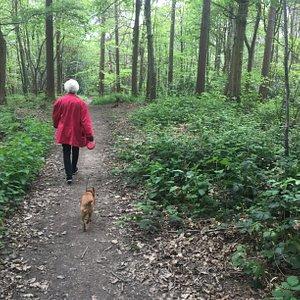 4.  Hemsted Forest, Benenden, Kent