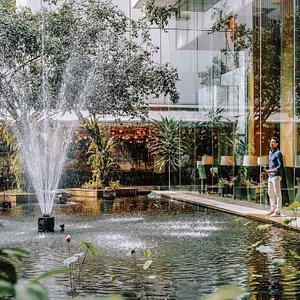 Koi Pond next to Lemon Garden Cafe