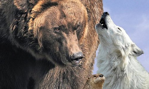 See live grizzlies, wolves, otters and birds of prey!