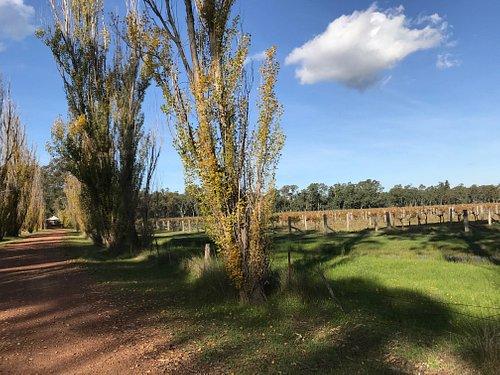 Vineyard driveway