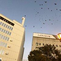岩田屋前の駅前公園には小鳥がたくさん