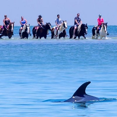 We love when the dolphins join in.