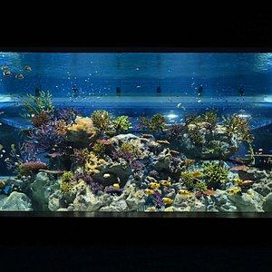 1/F Ocean Beauty