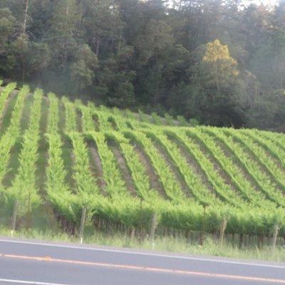 Vine Trail Napa Valley