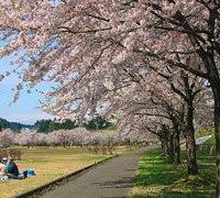 2020.5.3桜