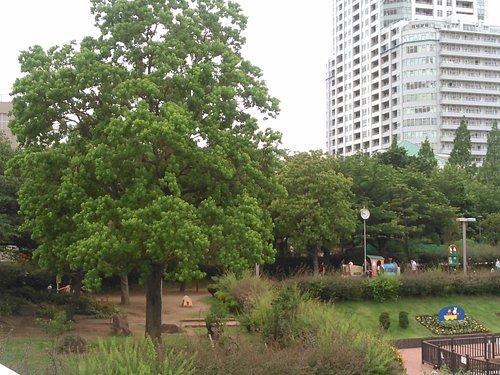 アイル橋より👀当公園内💚(5.31日☁)